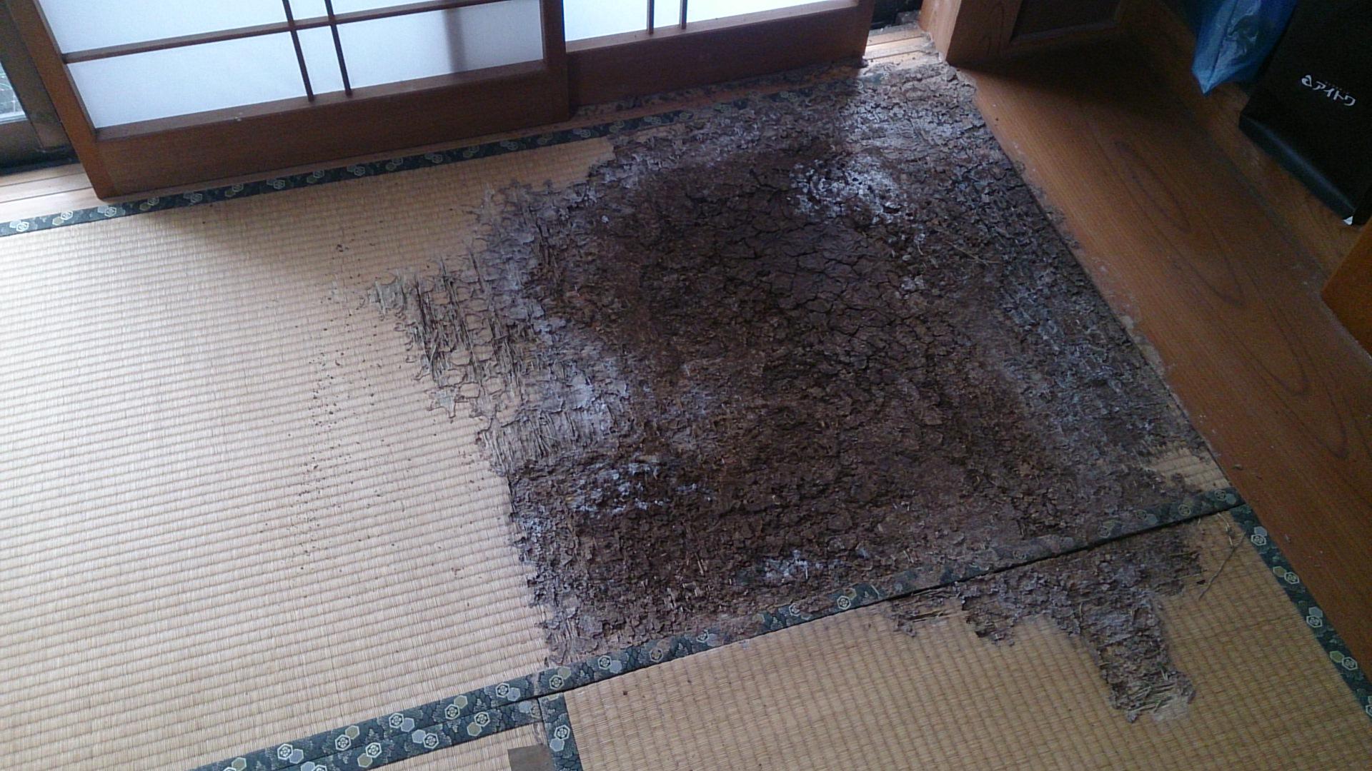 白蟻被害×畳