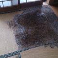 畳の白蟻被害